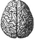 Brain-Illo6